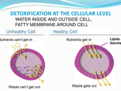 What_is_cellular_detox