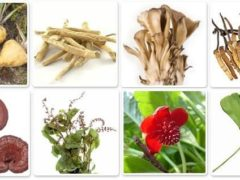 What counts as an Adaptogen?